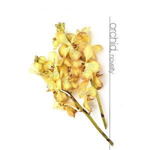 Orchid Novelty