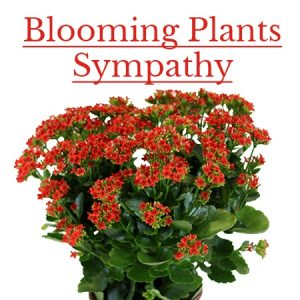 Sympathy Blooming Plants