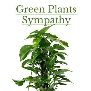Sympathy Green Plants